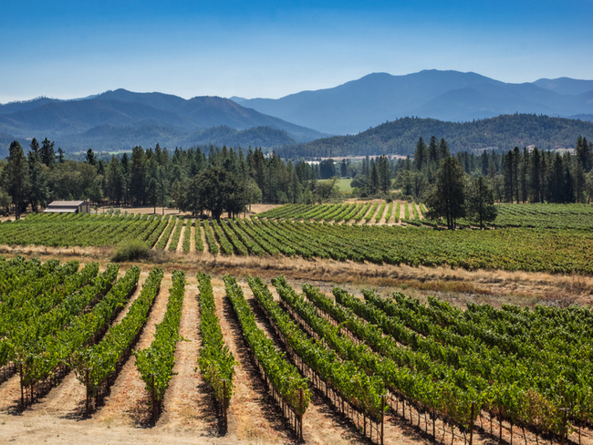One of many vineyards in Oregon by Vivian Mcavealey/Dreamstime.com