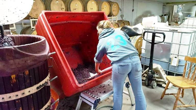 Hands-on Wine-making at Plum Hill Winery Photo by Victor Block