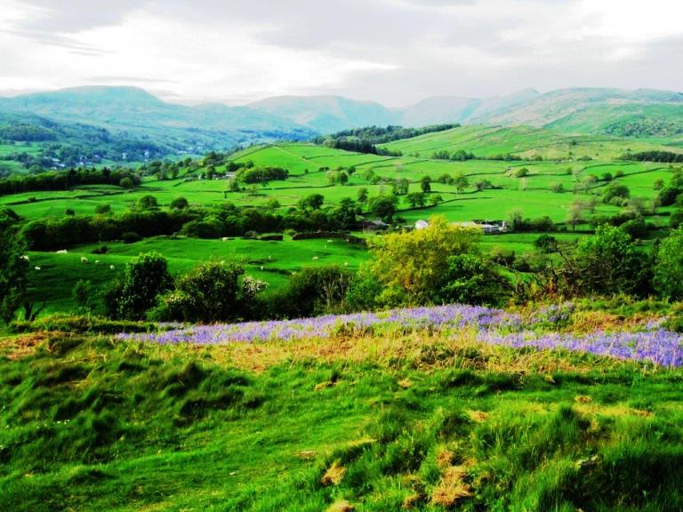 Lake District Countryside. Photo By Fyllis Hockman