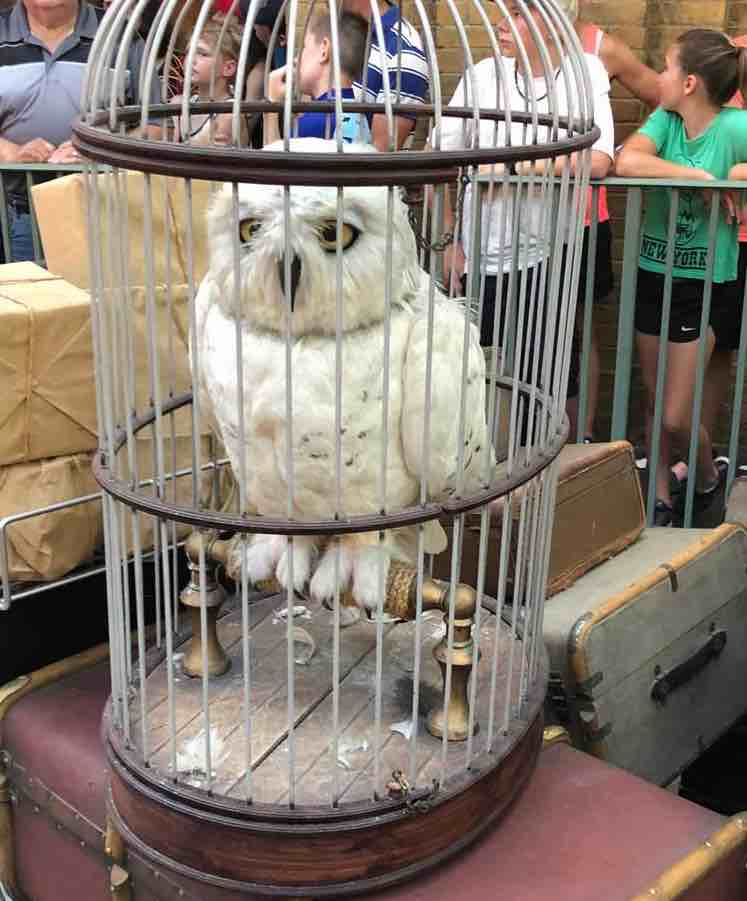 A life-like Hedwig watches you as you wait in line for the Hogwarts Express. Photo: Liana Moore/ Insider Families