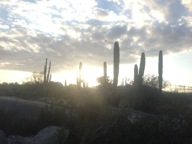 Catavina-baja california-roadtrip-highway-mexico