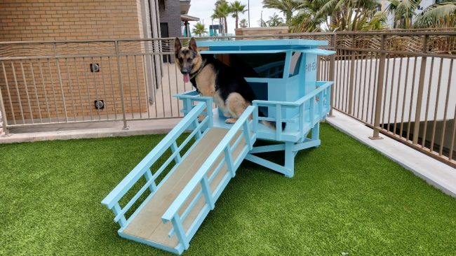 Dog in lifesguard stand
