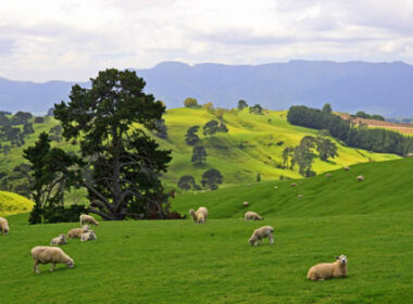 Travel writer Linda Duval has written about travel in New Zealand