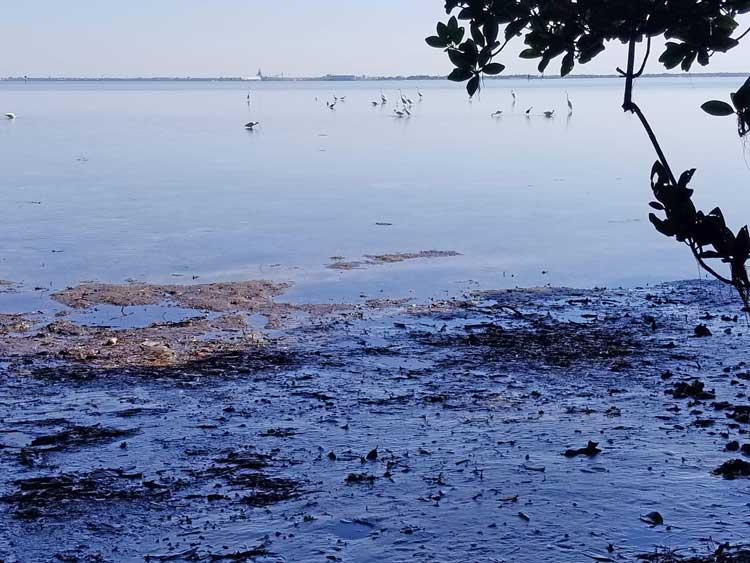 Birds at Weeden Island Nature Preserve