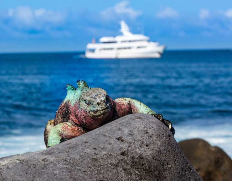 Small Ship Cruise in the Galapagos Islands