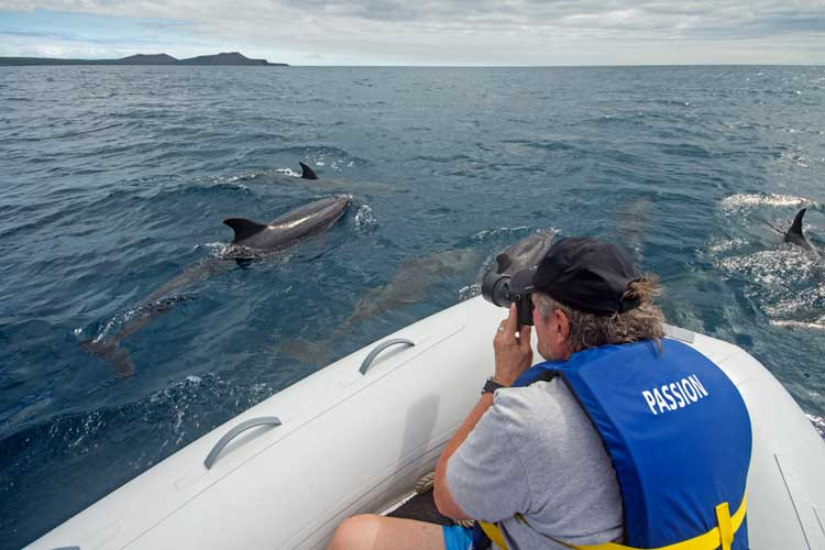 Dolphins in Galapagos islands
