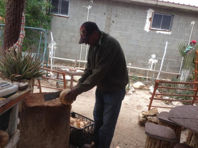 canada to mexico- coconut man- catavina- baja california- machete- fresh coconut juice- road trip