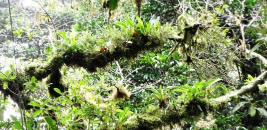 Monteverde Cloud Forest: A Costa Rican Tourist Attraction that Discourages Tourists