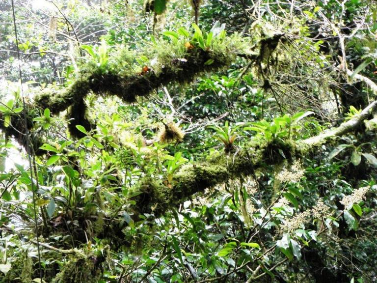 Monteverde Cloud Forest Epiphytes Cover Costa Rican Attraction. Photo by Fyllis Hockman