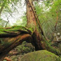 Best Hiking Spots in Japan