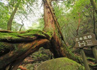 Hiking on Yakushima Island. Photo by Taro Watanabe
