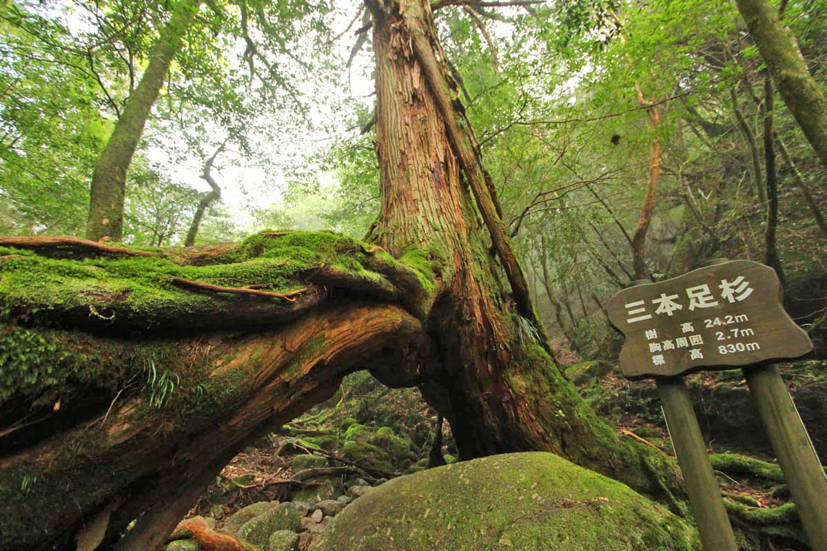 Hiking on Yakushima Island. Photo by Taro Watanabe