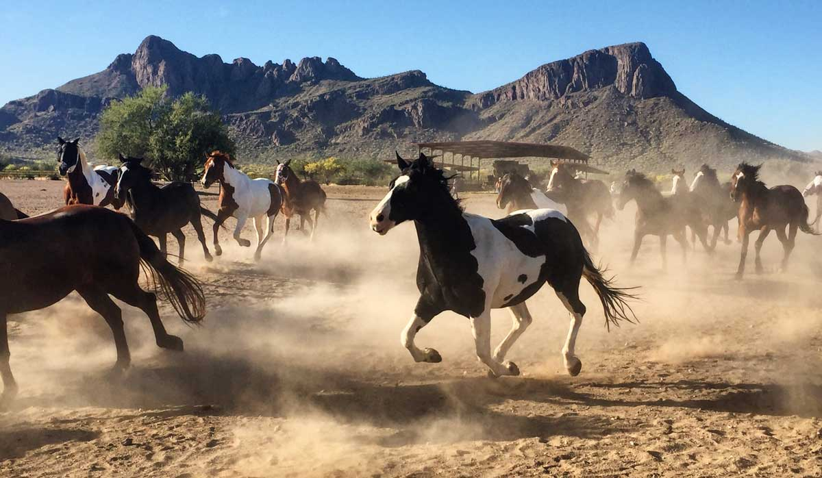 Horseback riding is a big part of White Stallion Ranch