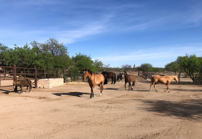 Tombstone Monument Ranch horses ready to be saddled up. Photo by Claudia Carbone