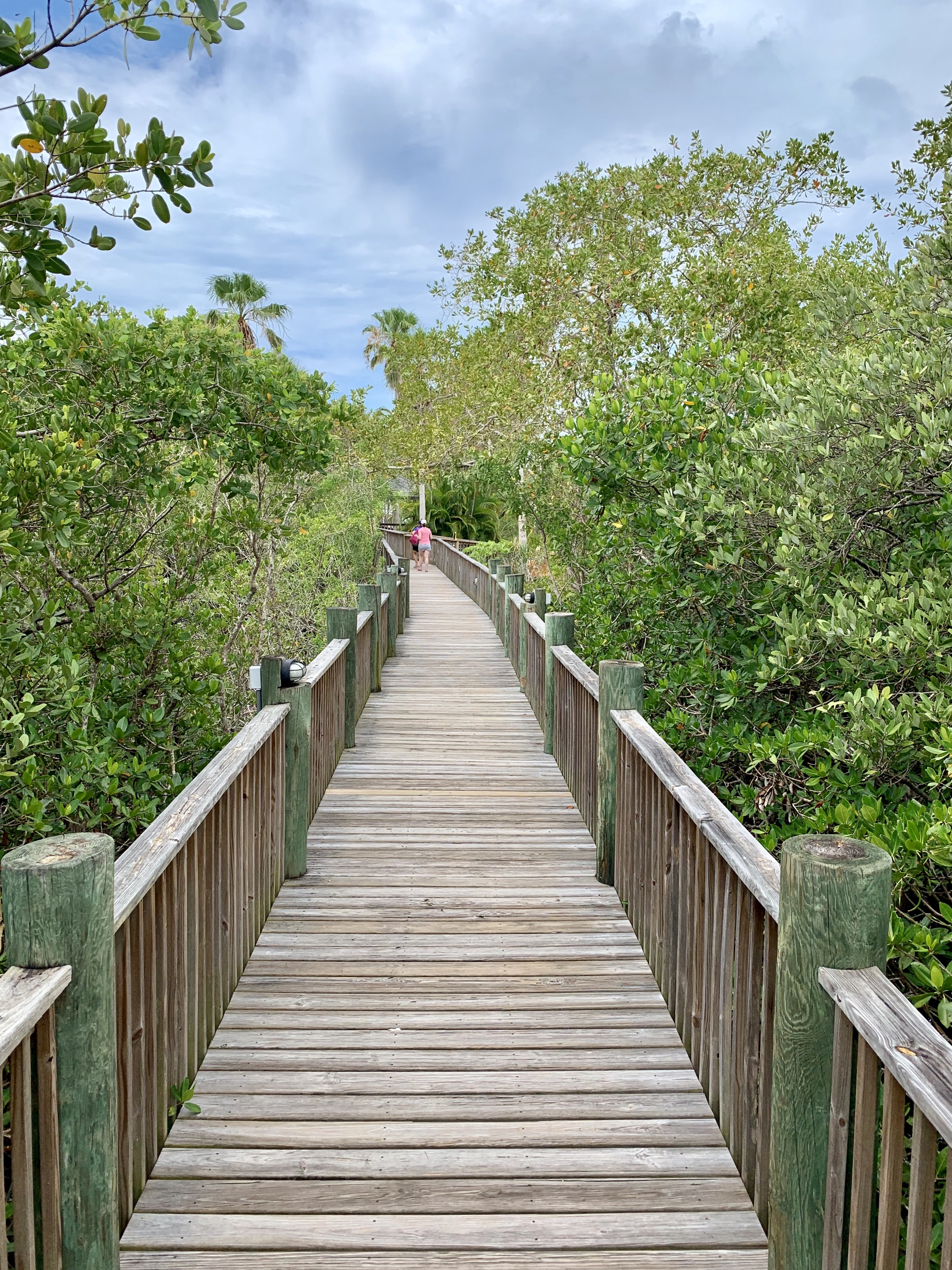 Scenic boardwalk through the mangroves at Palm Island. Photo by AY