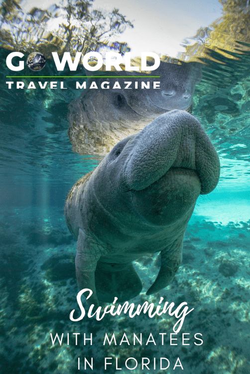 Visit Citrus County to experience the best swimming with manatees in Florida #citruscountyflorida #swimmingwithmanateesinflorida #swimmingmanatees #floridatravel