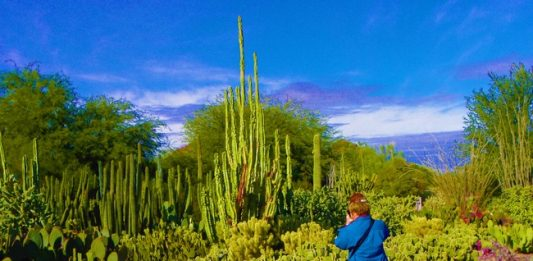 Scottsdale, Arizona: Where the Old West Meets Modern Chic