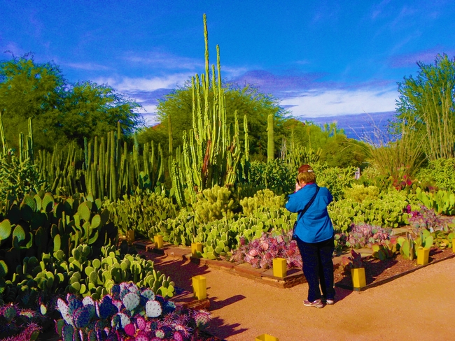 Scottsdale, Arizona is a Cactus Heaven, by Victor Block