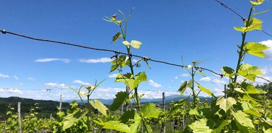 Wine and Culture Collide in Collio, Italy
