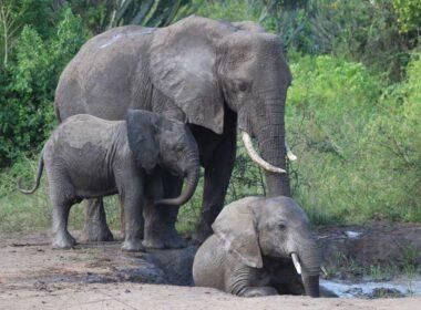 Kagera Safaris offers safaris in Kenya, Uganda, Rwanda, Congo and more.
