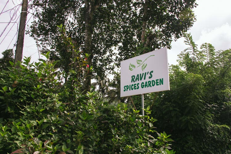 Ravi's Spices Garden in Kerala, India. Photo by Iona Brannon.