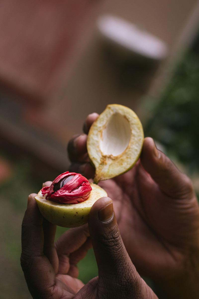 Two spices, nutmeg, and mace, within one fruit. Photo by Iona Brannon