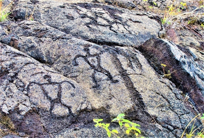 Petroglyph Carvings Depict Part of Hawaii Island's History. Photo by Victor Block