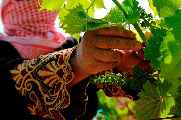 vineyard-tours-2