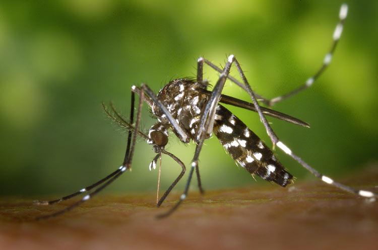 How to avoid mosquitos