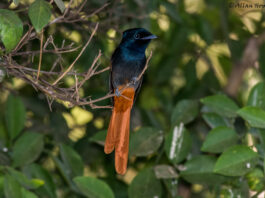 Bird watching in the Gambia. Photo by Allan Hopkins on https://www.flickr.com/photos/hoppy1951/