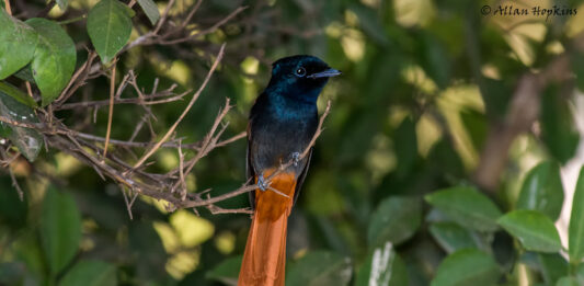 Birdwatching Adventure in The Gambia, Africa