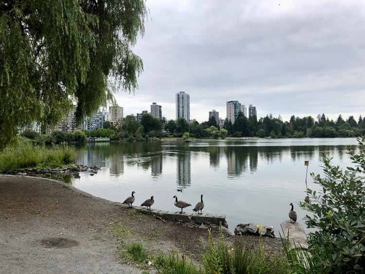 The Duck Pond in Ceperley Meadow between the Lost Lagoon and Second Beach where you can spot ducks, swans, Canada geese and even raccoons. Photo by Sharon Kurtz