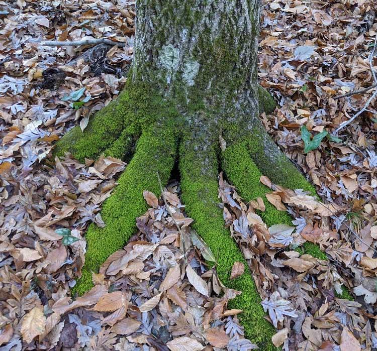Moss Fingers
