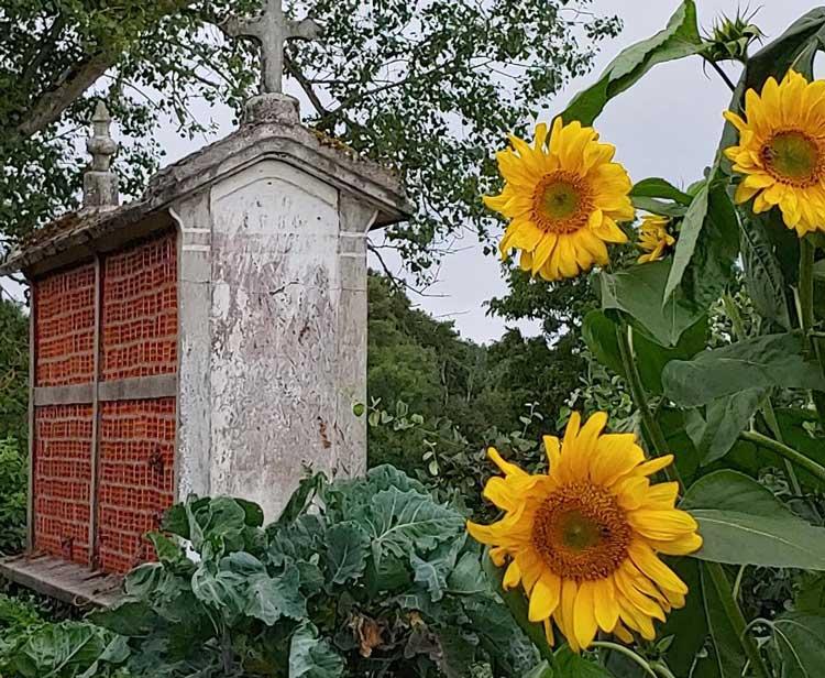 Sunflowers symbolic along the journey.