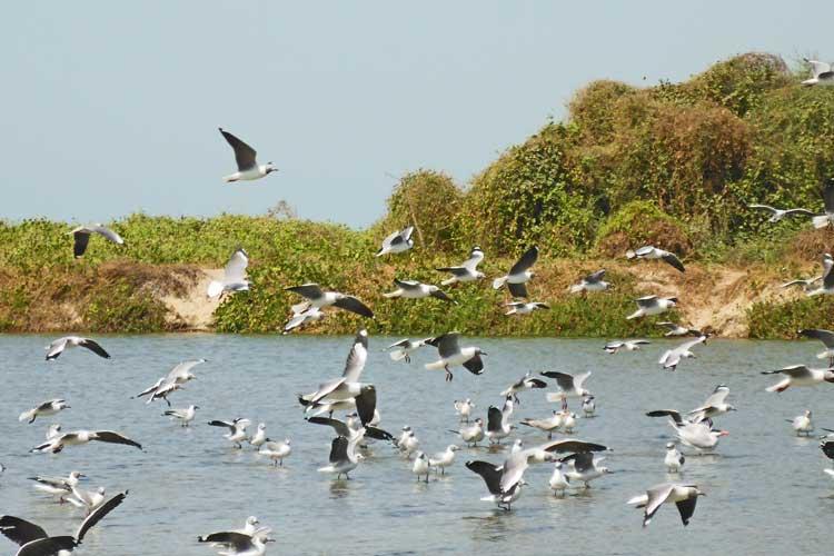 Tanji Bird Reserve lagoon in Gambia, Africa
