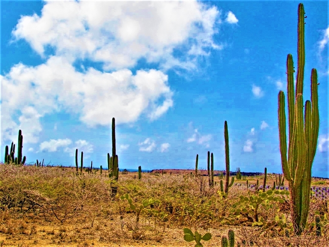 Some areas of Aruba's landscape are comprised of desert-like terrain where cactus flourish. Photo by Picturemakerslic/Dreamstime.com