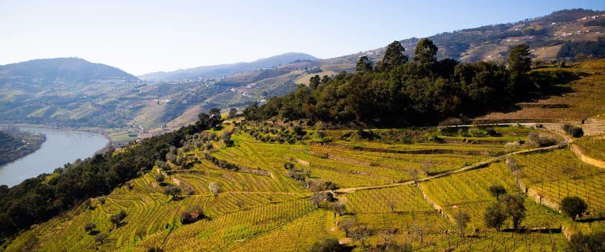 Hillside in rural Portugal.