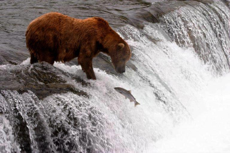 An example of the wildlife scenario the author wanted to see. Photo by Denali National Park