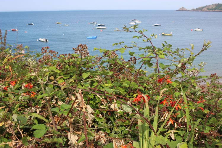 Brambles and boats at Bouley Bay on the island of Jersey in the Channel Islands
