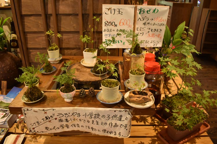 A selection of pot plants, cultivated by Yuri's daughters.