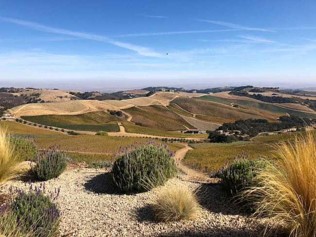 Vineyards in Paso Robles. Photo by Claudia Carbone