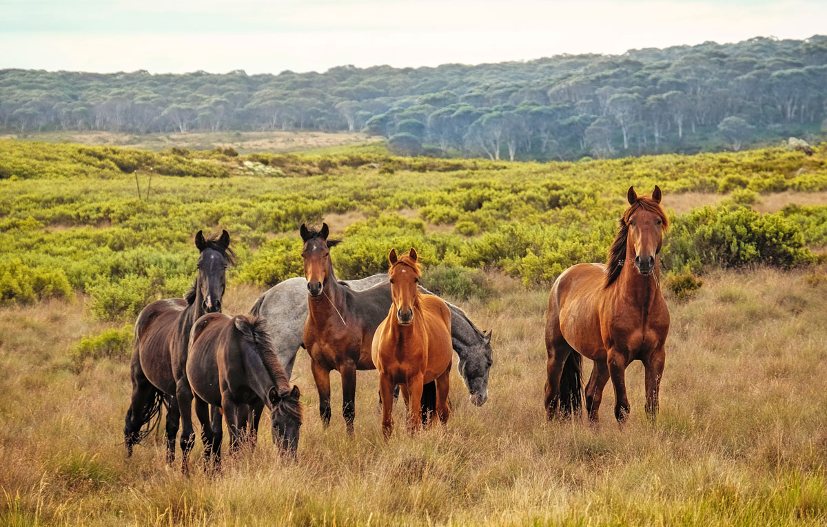 7 Best Dude Ranch Vacations