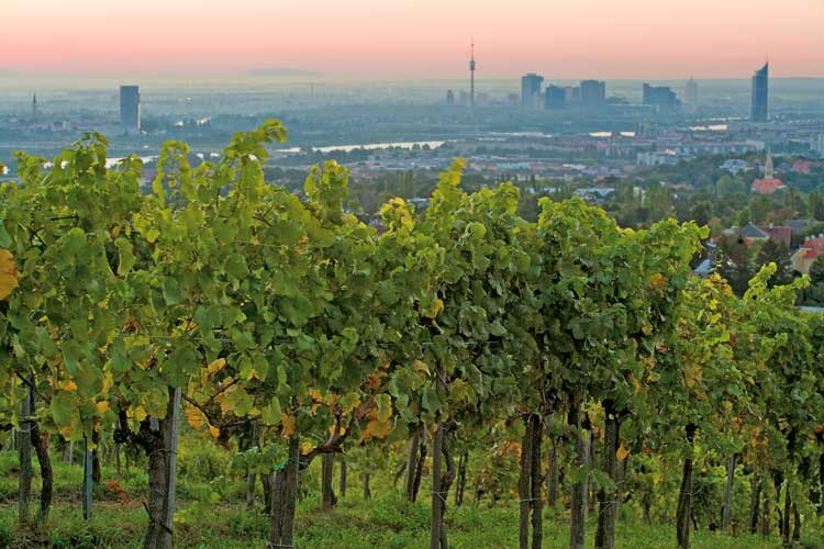 Overlooking the city from the vineyards in Vienna.