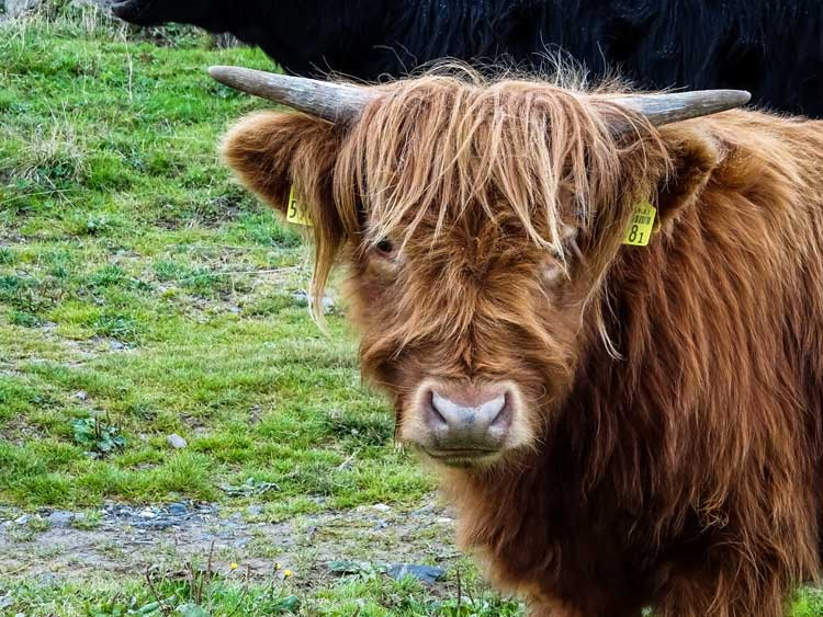 Wildlife on the Shetland Islands of Scotland