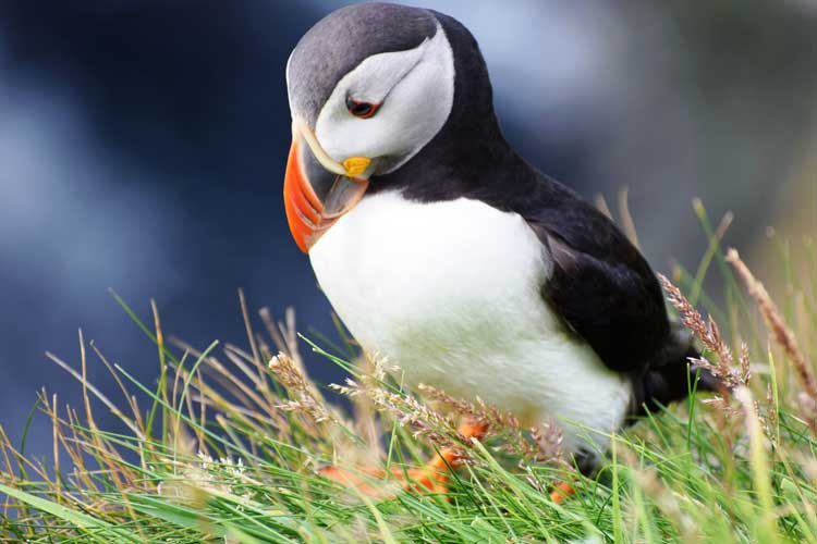 Travel Tips on Visiting Lerdwik in the Shetland Islands, Scotland