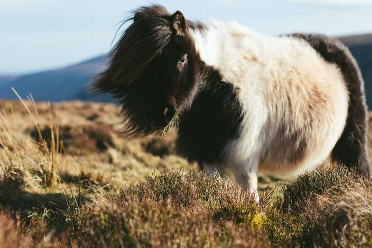 Visiting the Shetland Islands in Scotland and wildlife on these Scottish Islands