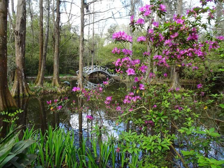 Magnolia Plantation in Charleston, South Carolina