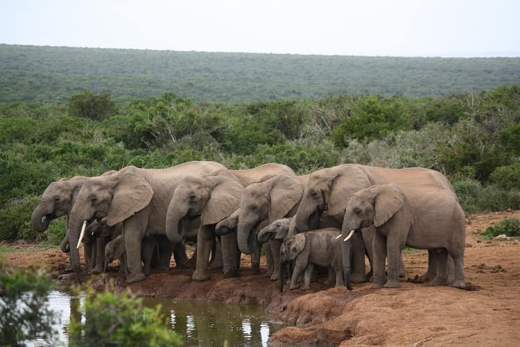 Elephant Family in Africa