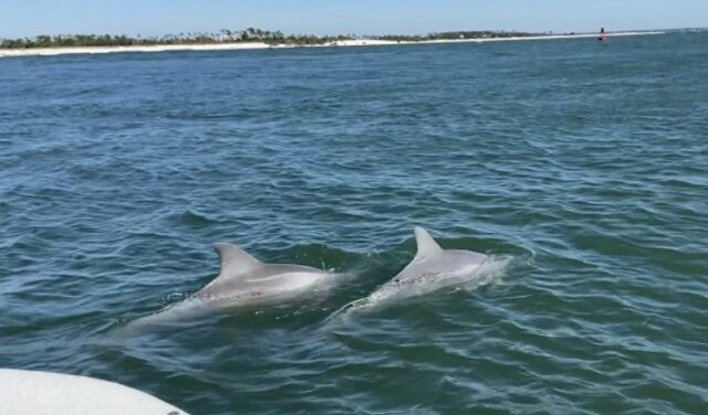 PCB dolphins
