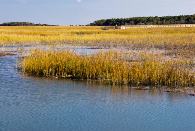 Salt water marsh landscape in Murrell's Inlet. Photo by Laura Ballard/Dreamstime.com
